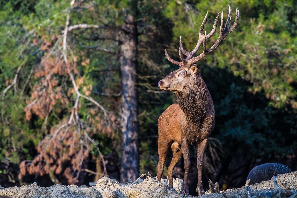 Prestations chasse