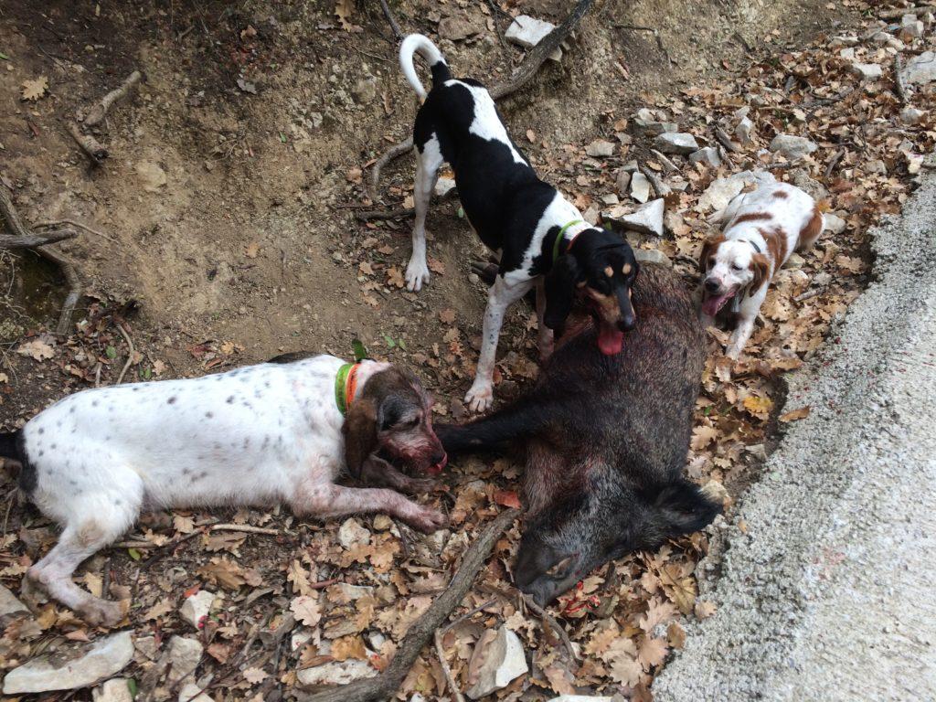 entrainement chiens Parc de chasse
