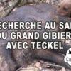Vidéo : recherche au sang du grand gibier avec teckel